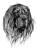 Gordon Setter Personalised Greetings Card